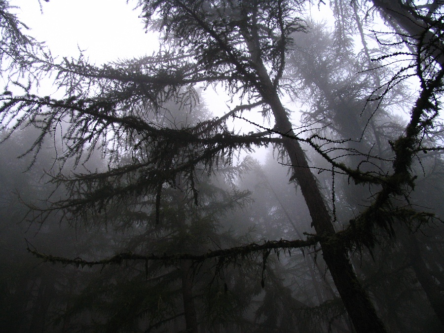 Spooky forest. - spooky forest - staefelalpji in the saas valley